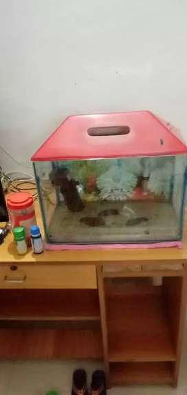 fish aqqrium