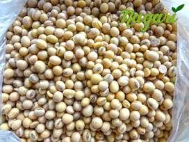 Kacang Kedelai Amerika Import 1 kg Mentah( Repack)