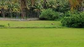 Mannuthy, Kerala