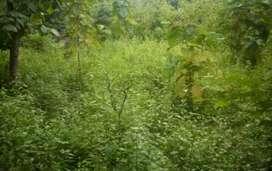 Lahan kosong seluas 7 hektar