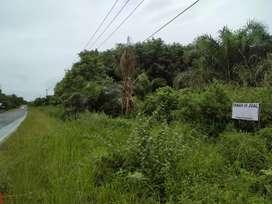 Jual Kebun Sawit lokasi setrategis Pinggir jalan Harga Bisa Nego