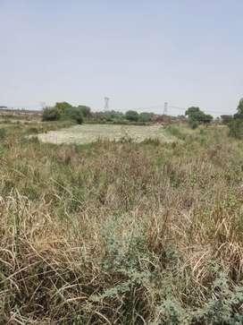 30bigha land दपसौरा for agriculture 2.5 lakh per bigha