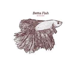 Betta fishs