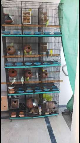 Australion Breeding Setup With 12 Portion Master Folding Cage For Sale