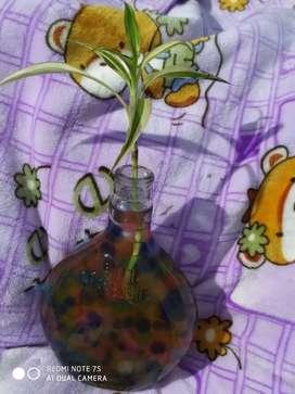 Indore plants