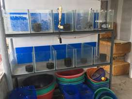 Fish tank, stand, basins for sale