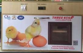 Egg incubator I Hatchery I setter I Incubator