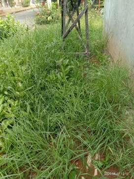 Jasa potong rumput taman/kebun membersihkan taman