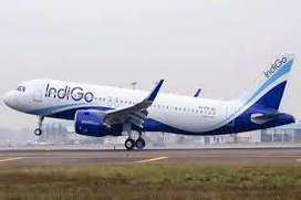 airlines company hiring for  candidates. indigo company