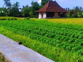 Disewakan Villa Joglo di Ubud Bali