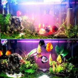 Jasa Membersihkan Aquarium Akuarium Profesional Rumah / Kantor