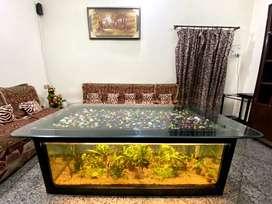 Aquarium cum center table