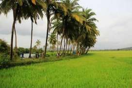 2200mtr clear title plot in Siolim on main road leading to Morjim