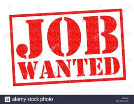 Wanted job for fresher