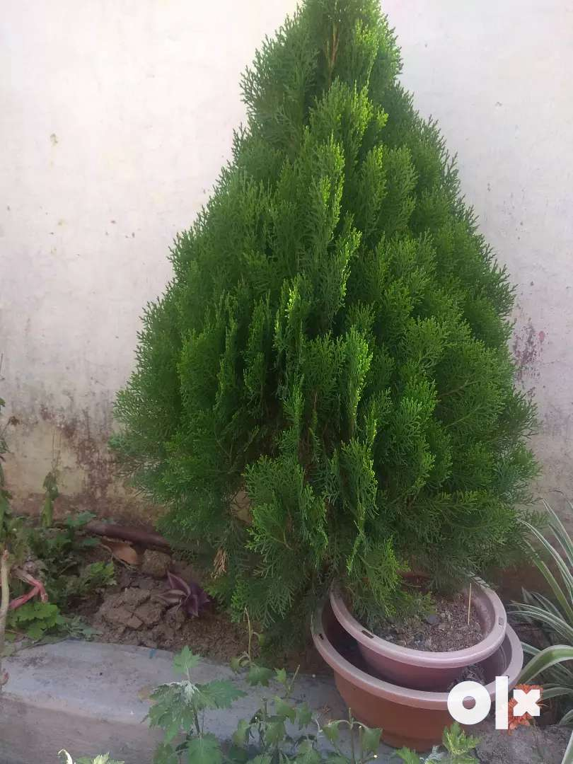 All kind of plants 0