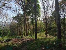 1.73 ACRE RUBBER PLANTATION WITH HOUSE FOR SALE AT MURIKKASSERY