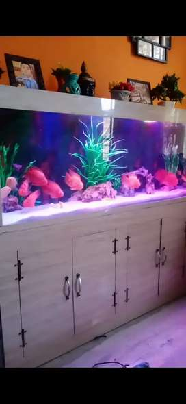 Fish cue aquarium decorator