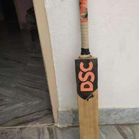 DSC Kashmiri willow , Duse bat