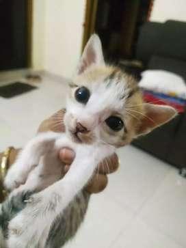 Cute indian kittens