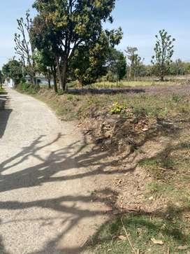 1 bigha land in Tilwari Bhauwala