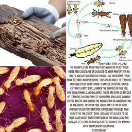 Before remodel or renovation construction your home termite treatment.