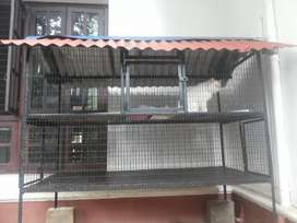 Cats and birds  cage