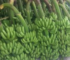 Distributor Pisang Barangan Medan spis spis