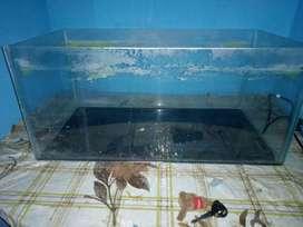 Neat and clean aquarium