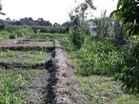 Tanah ladang sawah