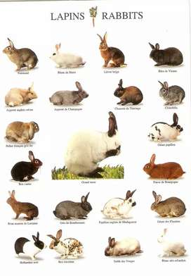 All type of rabbits available