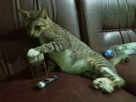 Cari kucing Paling murah