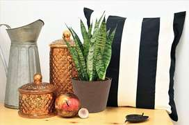Indoor Plants for your Home.