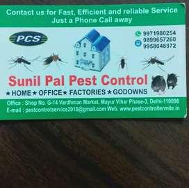 Termite (deemak)  pest control |Sunil pal pest control |