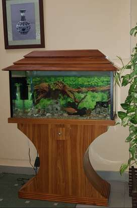 Fish Aquarium in Great Condition ( All accessories and Fish Included)