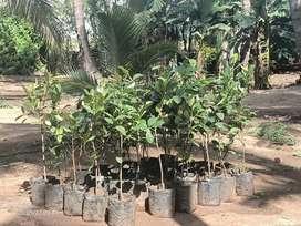 Land in Tirupur