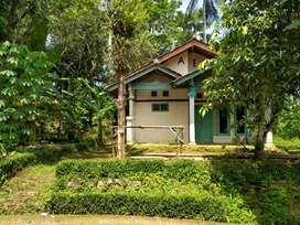 Ingin rumah dikampung, suasana desa? Rumah hrg 225 juta tanahnya luas.