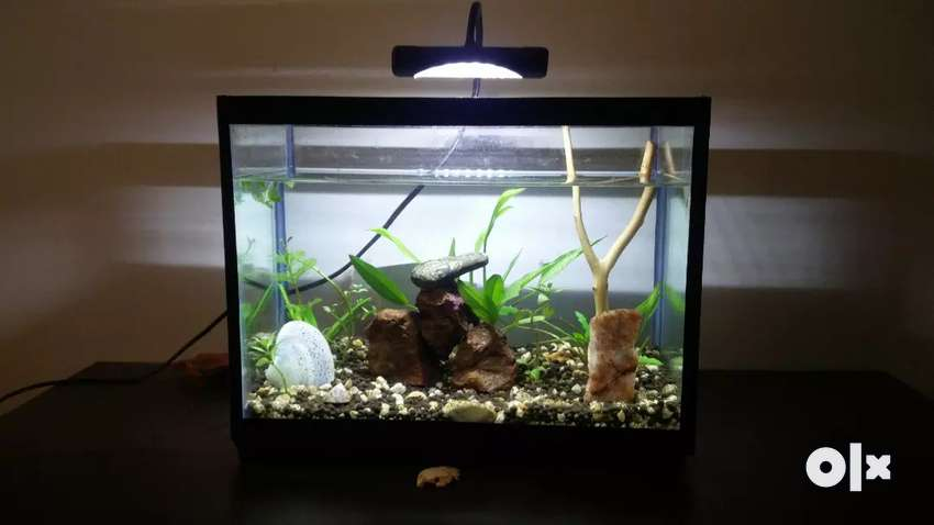 Small Planted Aquarium 12 x 9.5 x 7 inch 0