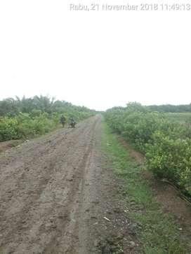Dijual Disewa Cepat Tanah SHM Kebun Ladang Sawit Murah Pinggir Jalan