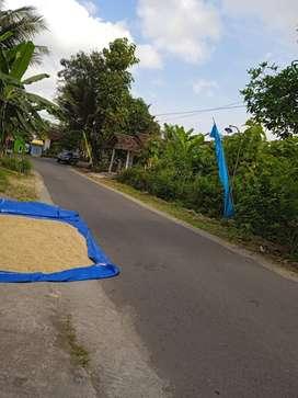 Daerah Minggir - Jogja, Tanah Murah Cocok Untuk Usaha Atau Ruko.