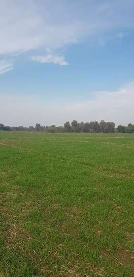 Agricultural land for rent canal irrigated