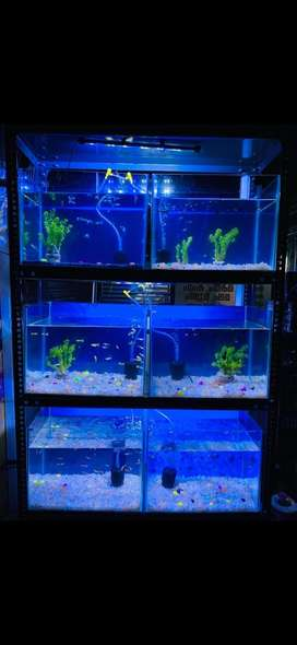 Aquariums with stand and accessories