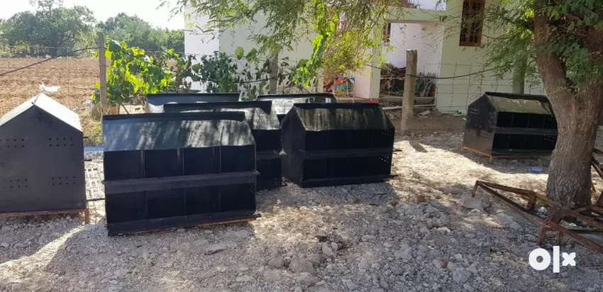 Egg Box for sale 0