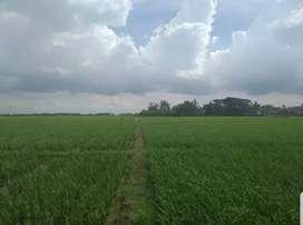 Jual Tanah 8 Hektar