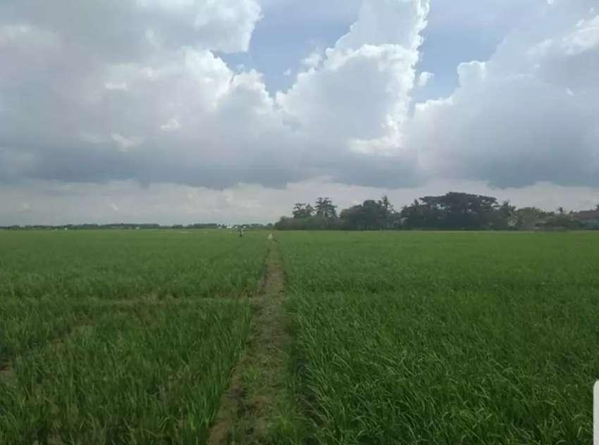 Jual Tanah 8 Hektar 0