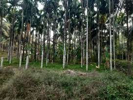 Dairy + cashew + hollow blocks+ 6.39 acres arecanut land