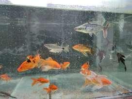 Exotic Fish and Aquarium for sale