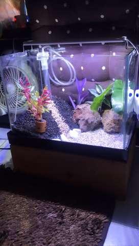 akuarium aquarium aquascape bending kaca fullset
