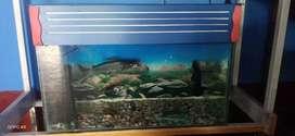 2/1 aquarium good condition