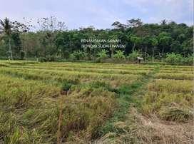 DIJUAL BU! Tanah Sawah Murah di Gunungpati, Semarang
