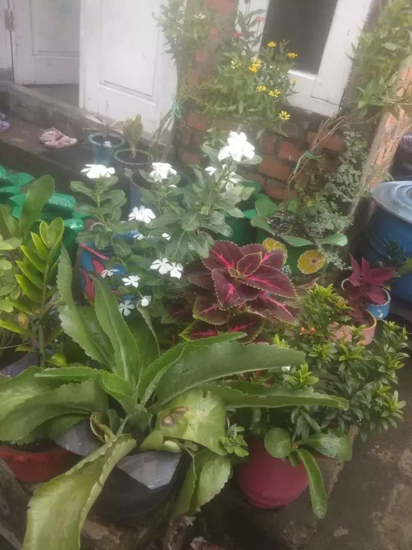 Pot bunga minimalis 0